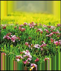 miel-fleurs-thumbnail