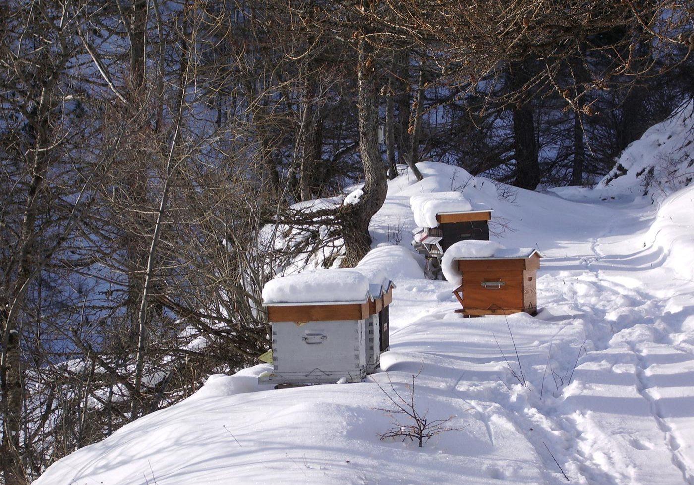 Que fait un apiculteur en hiver ?